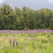 Blumenwiese Auf Dem Rückweg An Der Milford Road