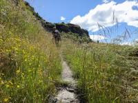 Durch Blumenwiesen Zum Gipfel Des Rocky Mountain