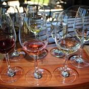 Die Erste Weinprobe