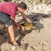 Seppel Bringt Eine Schildkröte Zurück Zum Meer