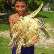 Frankie Und Die Gerettete Schildkröte