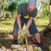 Die Kokosnuß Wird Zuerst Geschält