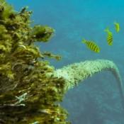 Samoas Unterwasserwelt