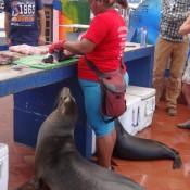 Seelöwen Auf Dem Fischmarkt