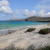 Strand Von Punta Cormorant Auf Floreana