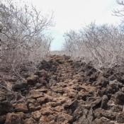 Steiniger Weg Auf Isla Lobos (san Cristóbal)