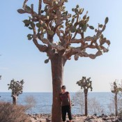 Riesiger Kaktusbaum