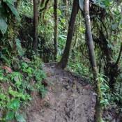 Matschiger Pfad Durch Den Wald