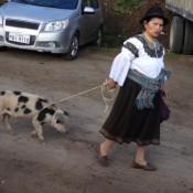 Auf Dem Viehmarkt