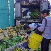 Bananenlaster