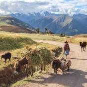 Esel, Schafe Und Kühe
