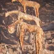 Ausgestopfte Lamas Werden Für Verschiedene Rituale Benutzt