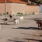 Ein Rudel Hunde
