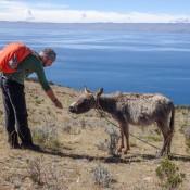 Seppel Füttert Einen Esel