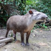 """Antonio, Der """"haus Tapir"""""""