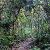 Im Dichen Regenwald