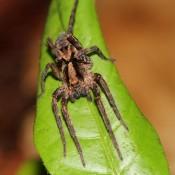 Eine Spinne Bei Der Nachtwanderung