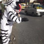 In La Paz Bringen Zebras Fußgänger Sicher über Die Straße