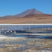 Flamingos In Der Laguna Hedionda